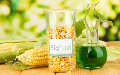 Renewable Fuels: What is Biodiesel?